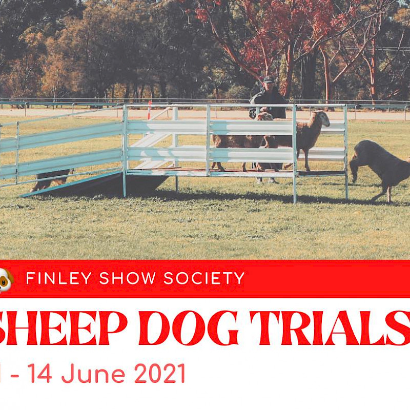 2021 Sheep Dog Trials image